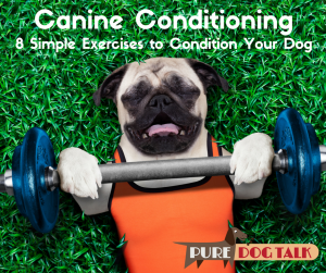 Canine Conditioning-2