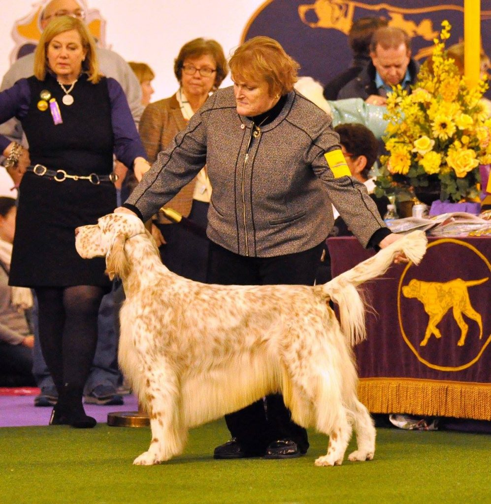 Eileen Hackett and English Setter