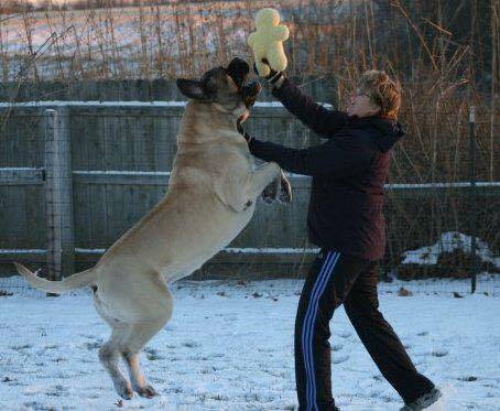 top dog laura king