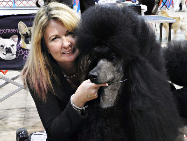 Dog Show Grooming Poodle University