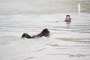 Newfoundland Dog - Katherine Payne Photography