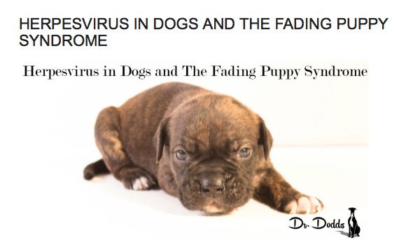 Canine Herpes - Dr. Jean Dodds
