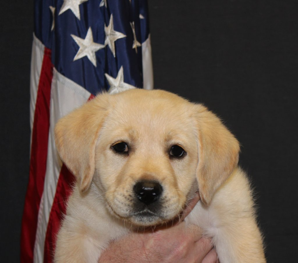 Patriotic Puppies