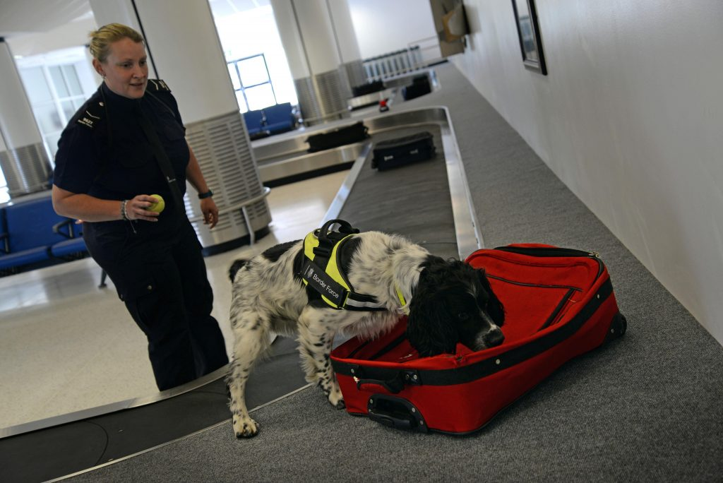 Detection Dog at AirportDetection Dog at Airport
