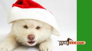Laura Reeves Sings 12 Puppies of Christmas
