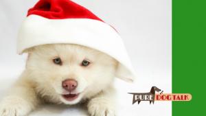 Laura Reeves Sings 12 Puppies of Christmas