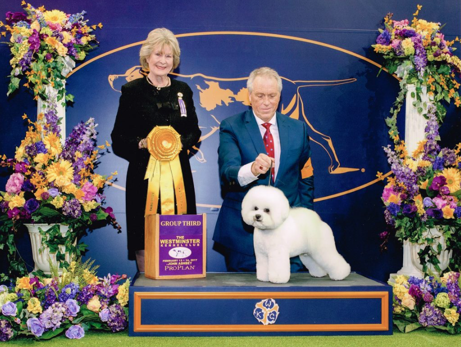 Bichon Frise Flynn with Bill McFadden