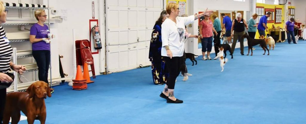 Positive Training for Show Daogs