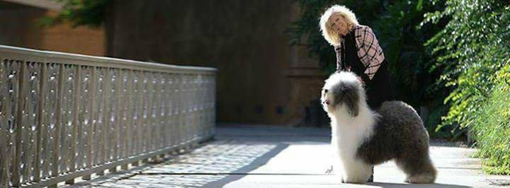 Breeders' Voice: Jere Marder – Lambluv Old English Sheepdogs