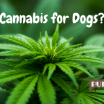 163 – Cannabis for Dogs?|Kari Taylor and Alternative Therapies|Pure Dog Talk