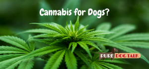 Cannabis for Dogs?
