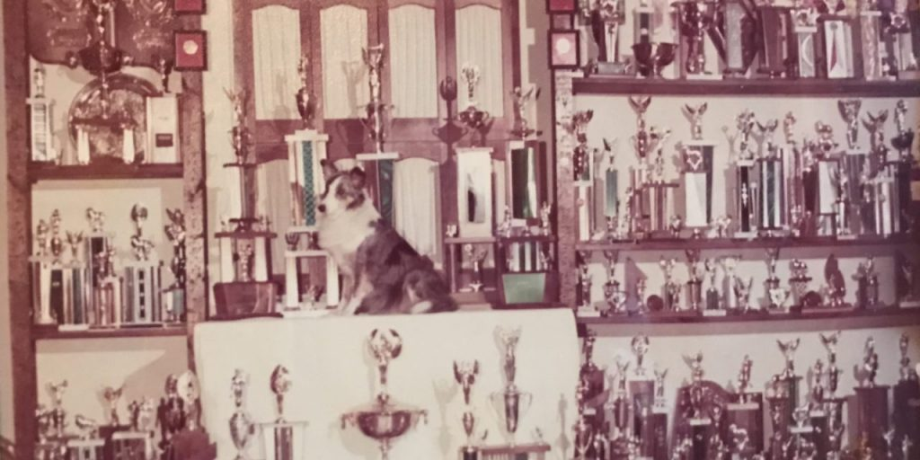 LaurieSheltietrophies-1280x640