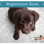 166 – Mark Dunn: AKC Registration Trend Reversal|Pure Dog Talk