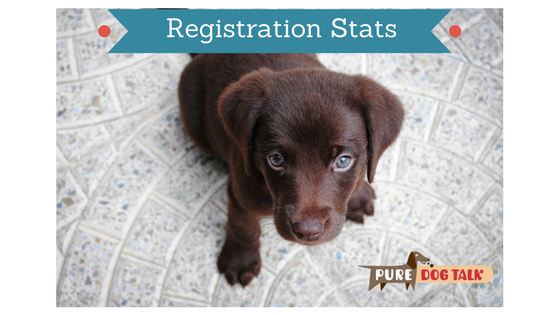 Mark Dunn: AKC Registration Trend Reversal|Pure Dog Talk