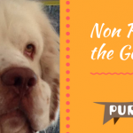 179 — Non Profit Foundations Benefit our Breeds | Pure Dog Talk