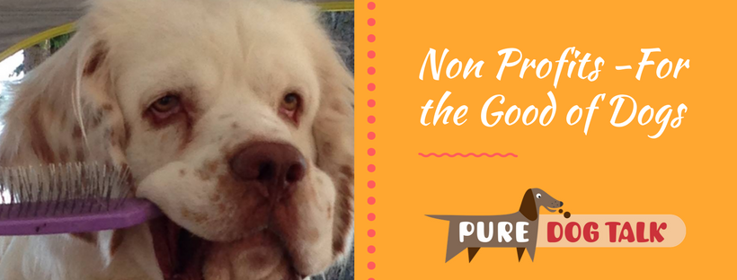 Non Profits For the Good of Dogs