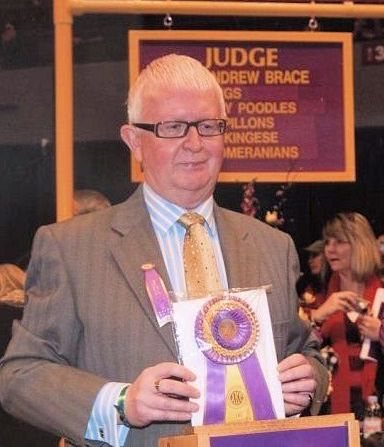 Judging at Westminster Kennel Club