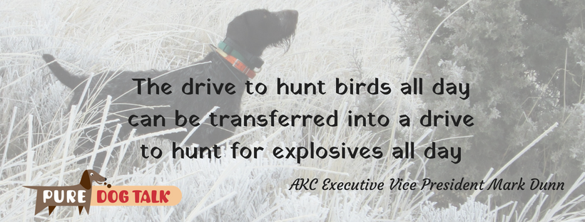 • Drive to hunt birds all day can be transferred into a drive to hunt for explosives all day