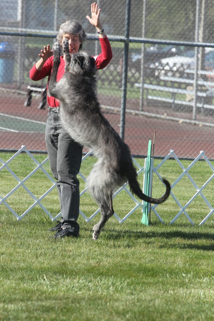 Debbie Cutter and one of her top obedience Scottish Deerhounds