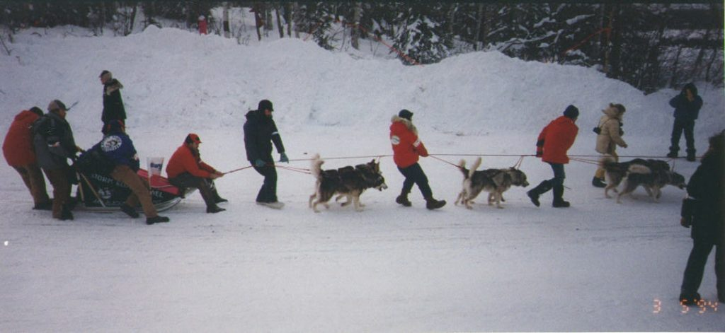 The Storm Kloud Alaskan Malamutes headed for the start line of the Iditarod in 1994.