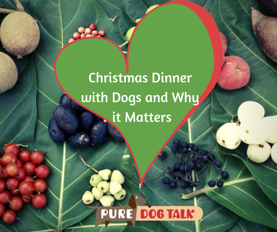 Christmas Dinner with Dogs and Why it Matters