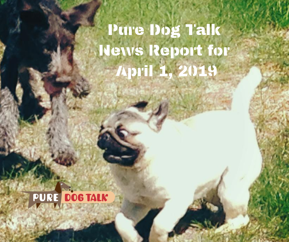 Pure Dog Talk News Report for April 1, 2019 (1)