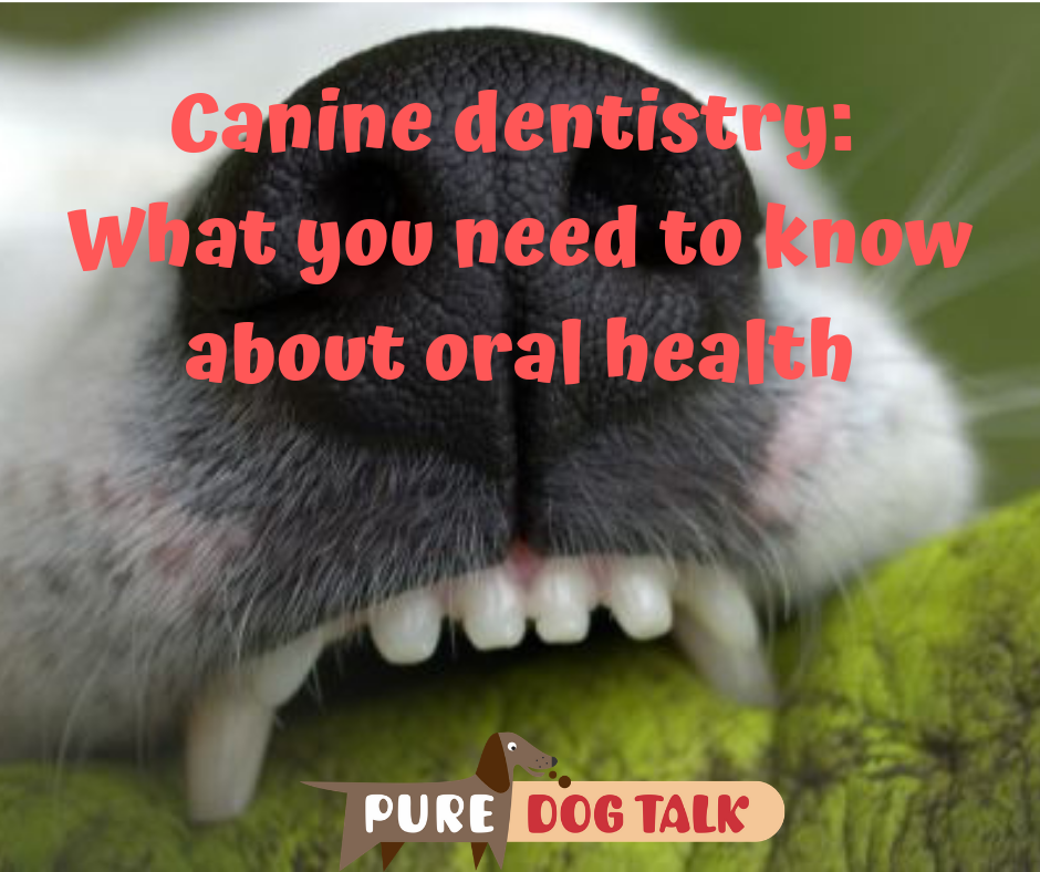 Canine dentistry_ What you need to know about oral health