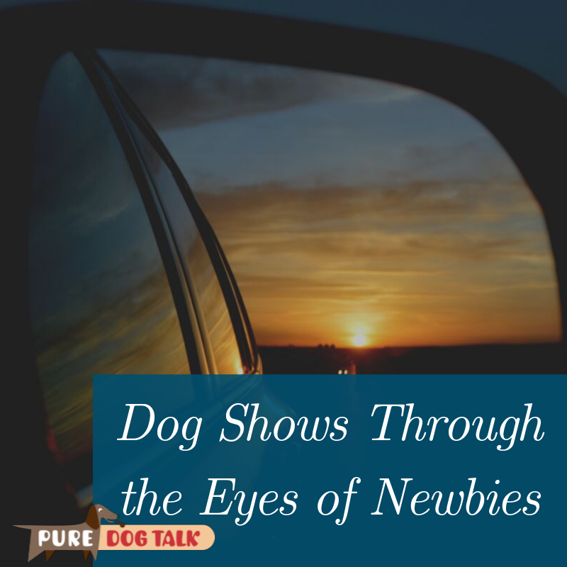 Dog Shows Through the Eyes of Newbies