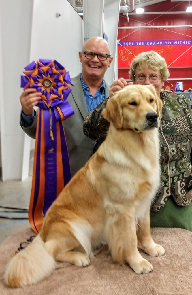 Golden Retriever Breed Education with Michael Faulkner