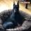 337 – Black & Tan Dynamos: The Wash & Wear Manchester | Pure Dog Talk