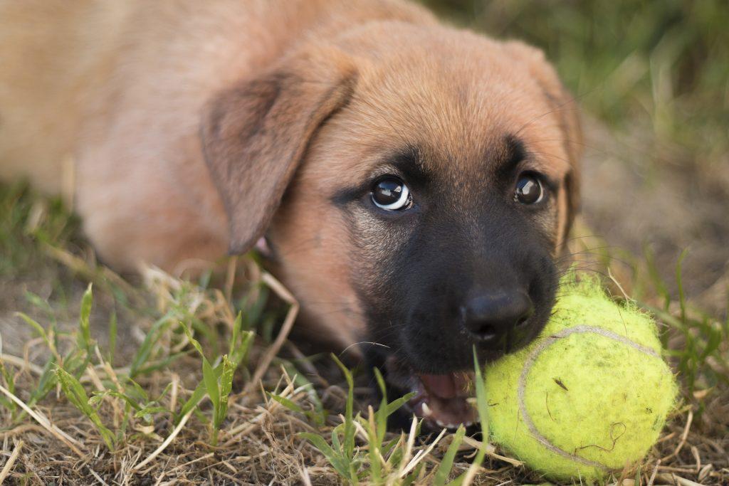 puppy-4573844_1920