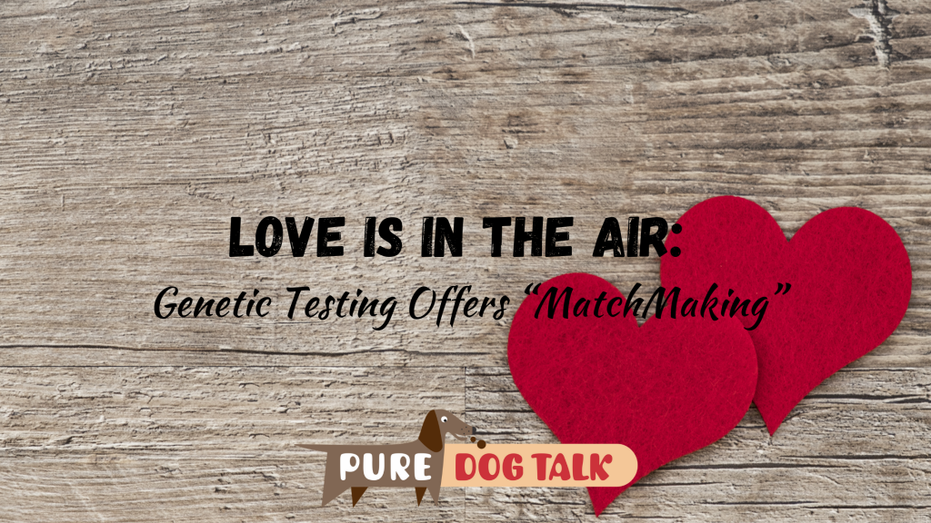 "Love is in the Air_ Genetic Testing Offers ""MatchMaking"""