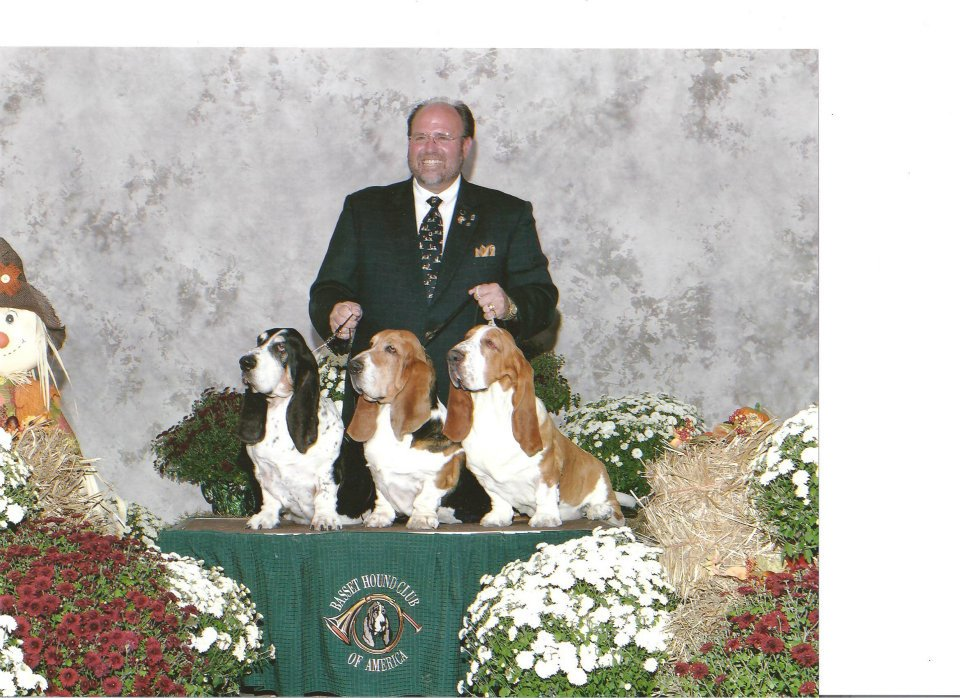 """""""My Three Sons"""" taken at the 2006 BHCA Nationals. The ONLY time the top three, all-time Best in Show winning Basset Hounds competed at the same show! L-R Ch Deerhill's Great Gatsby, 52 all-breed bests, Ch Topsfield Bumper Cars, 45 all-breed bests and Ch Topsfield Beethoven, 34 all-breed bests, 131 in total! -- Bryan Martin"""