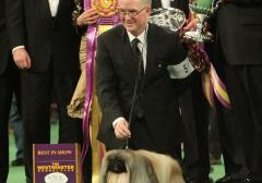 David Fitzpatrick and Malachy winning BIS at Westminster Kennel Club in 2012.