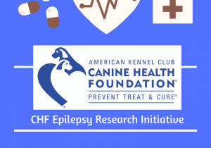 CHF Epilepsy Research Initiative