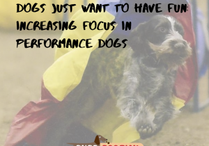 Dogs Just Want to Have Fun_ Increasing Focus in Performance Dogs (1)