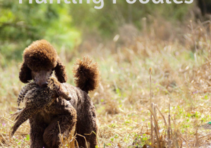 Hunting Poodles