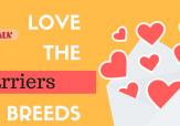 Love the Breedssome love (3)