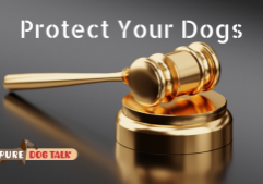 Protect Your Dogs