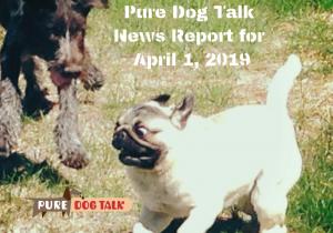 Pure Dog Talk News Report for April 1, 2019 (1)