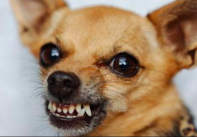 Dogs will give warning signs before they resort to overt aggression.