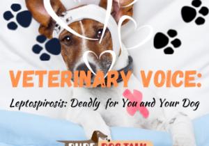 Veterinary Voice (3)