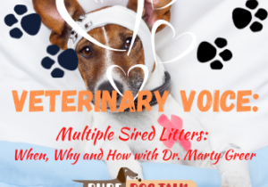 Veterinary Voice