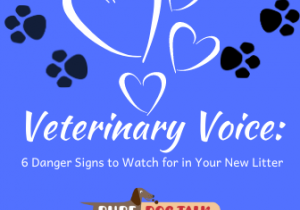 Veterinary Voice_ (2)