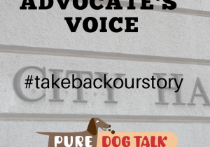 advocate's voice (3)