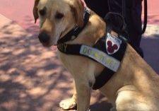 disney picture detection dog