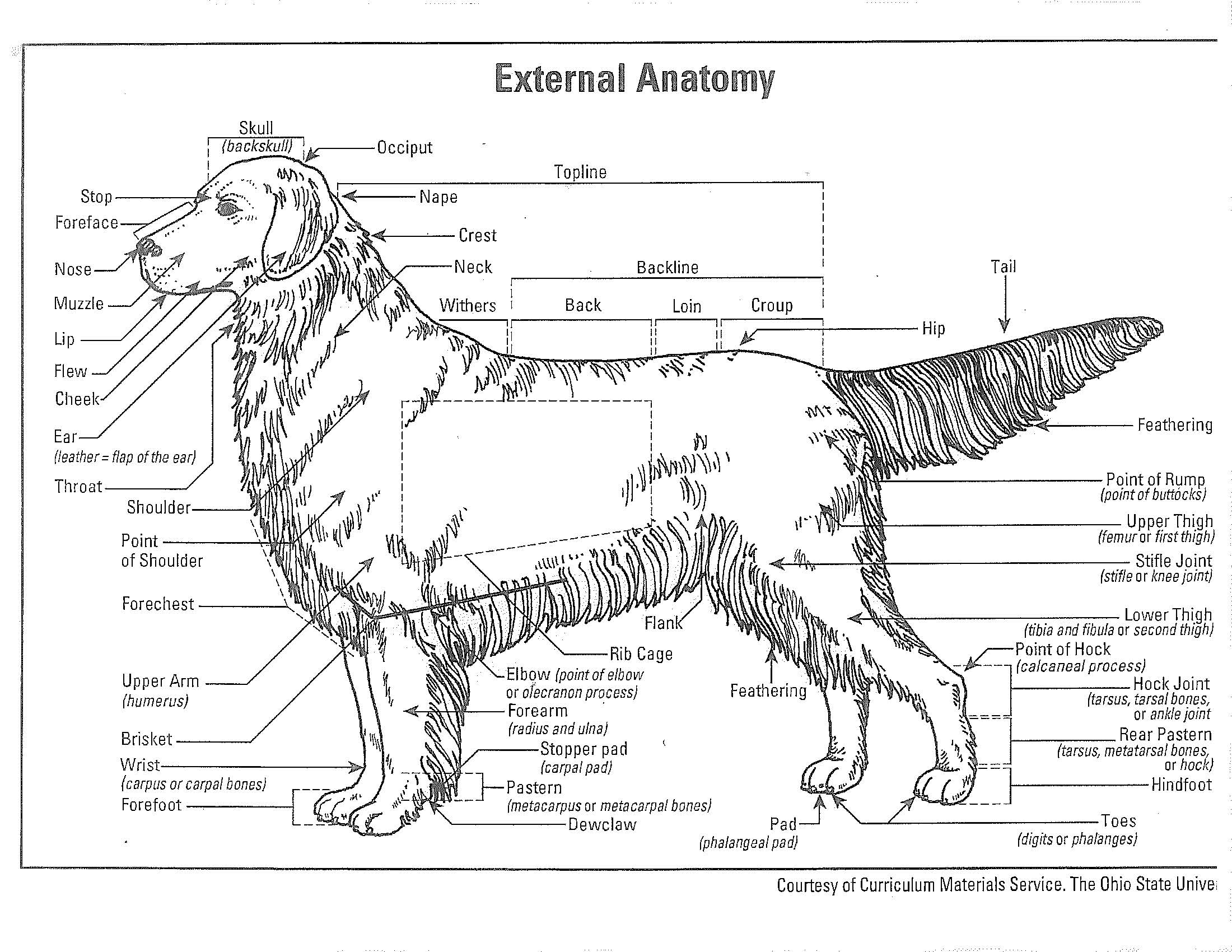 external_anatomy2