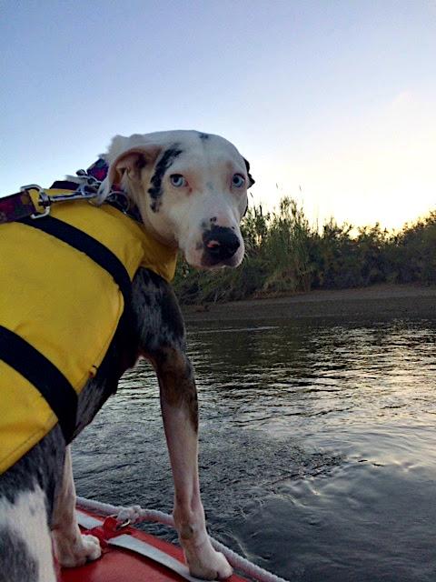 Piglet on boat