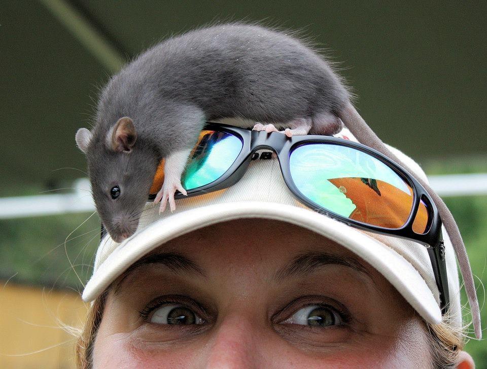 Barnhunt Rats!