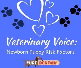 Veterinary Voice_ (4)
